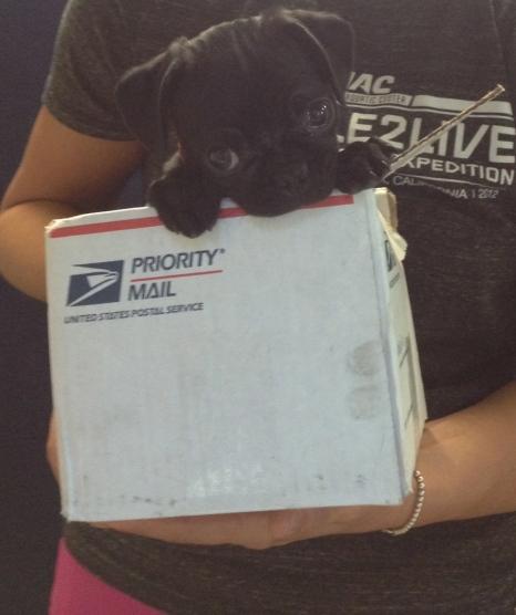 Package Biggie